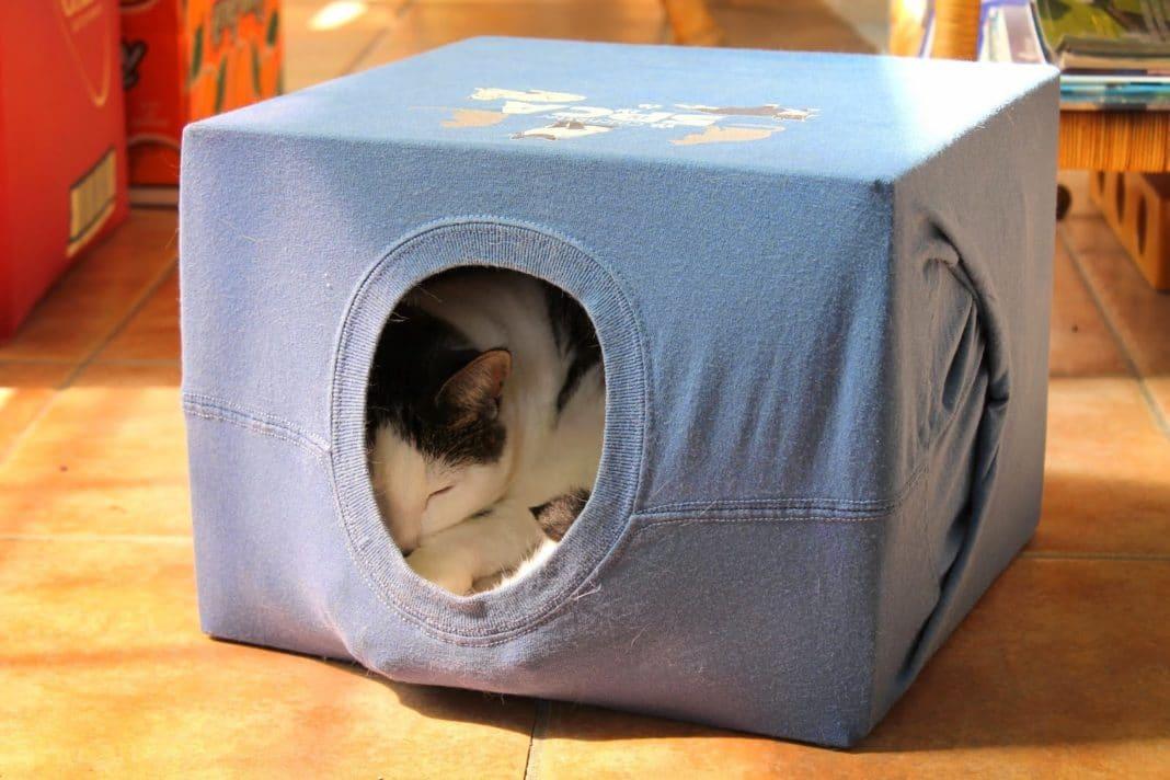 Игрушка коробка для кота своими руками 76