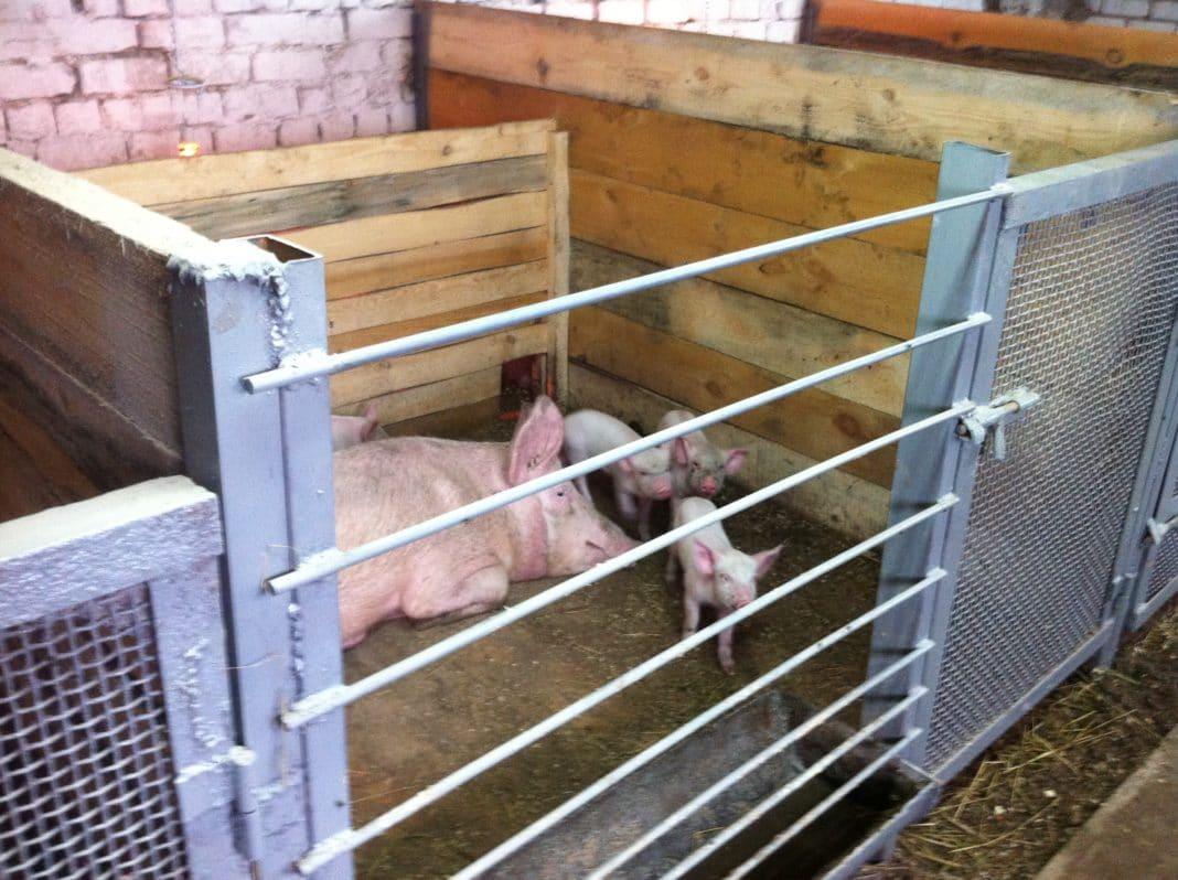 Кормушки свиньям своими руками