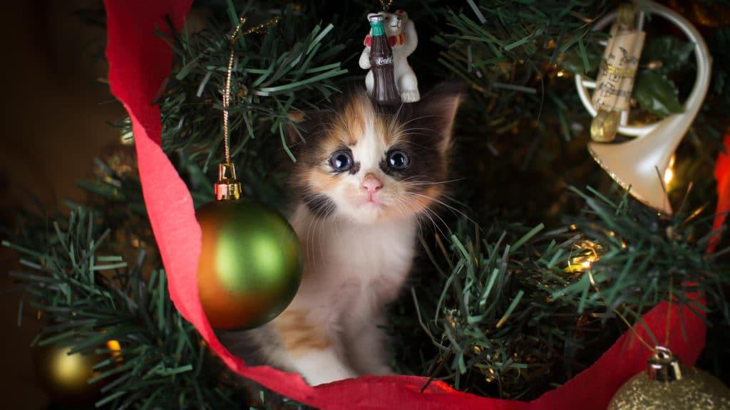 7 советов, как уберечь новогодний декор от домашних животных