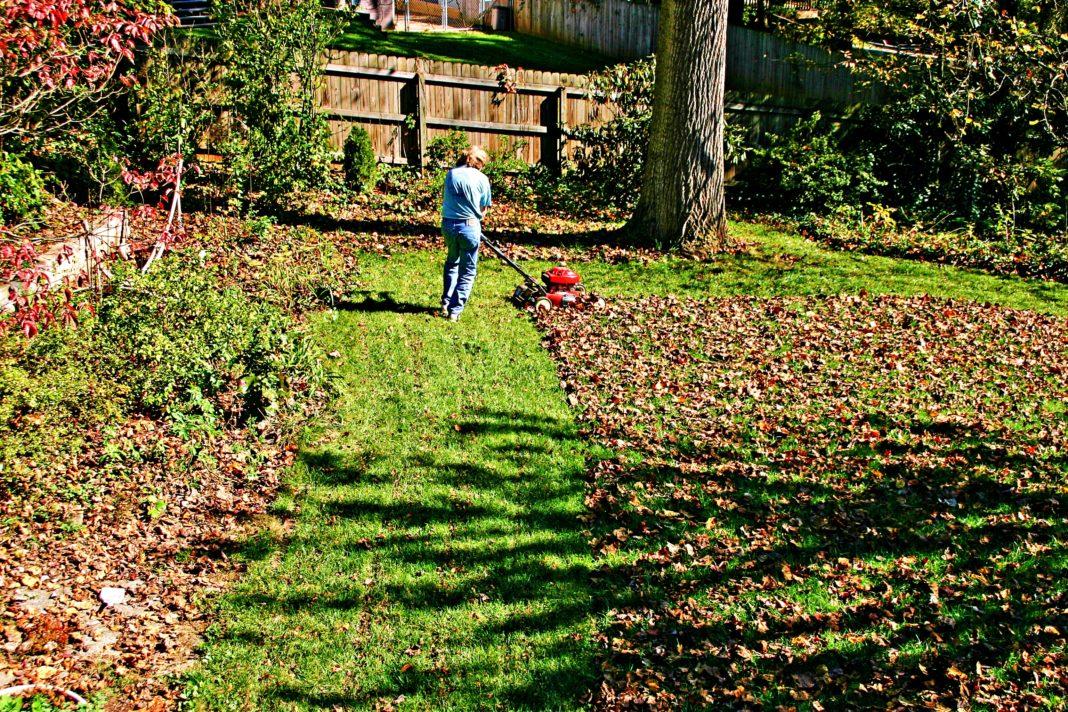 5 пунктов, на которые нужно обратить внимание при подготовке газона к зиме