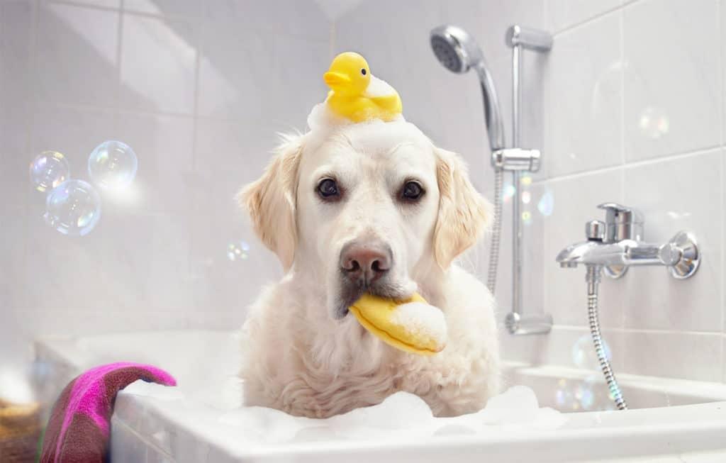 Если у вас дома есть животные, лучше остановить выбор на ванне