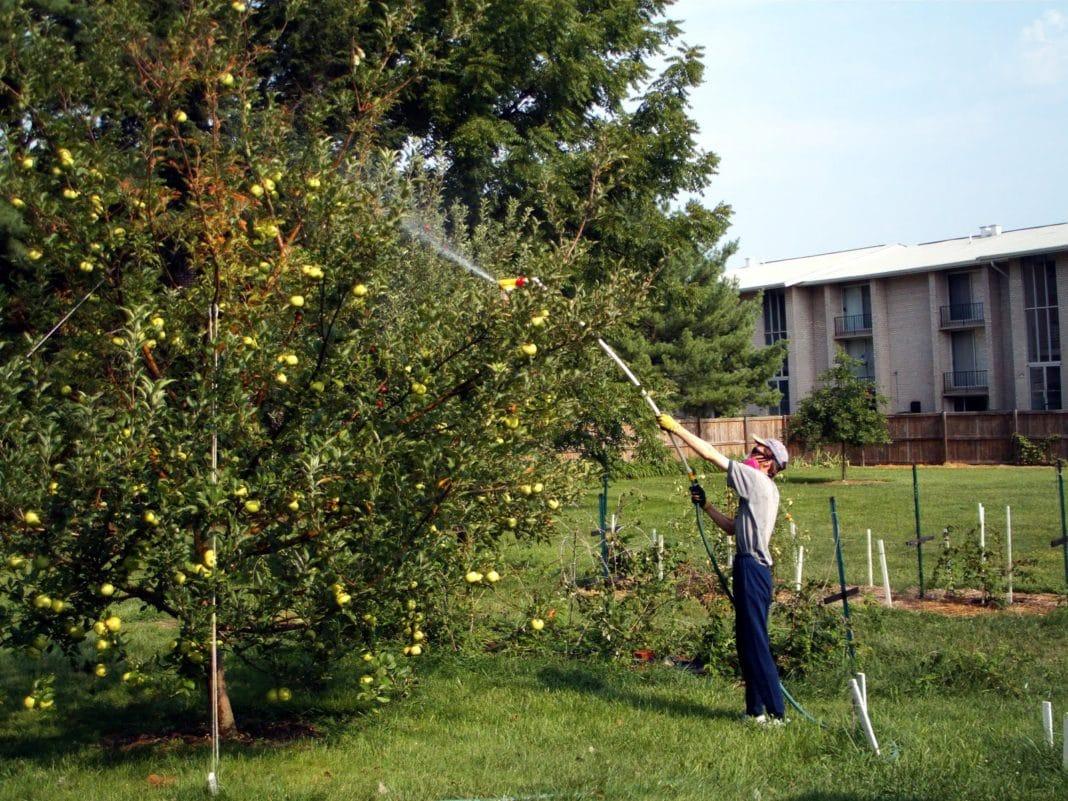 Обработка яблонь