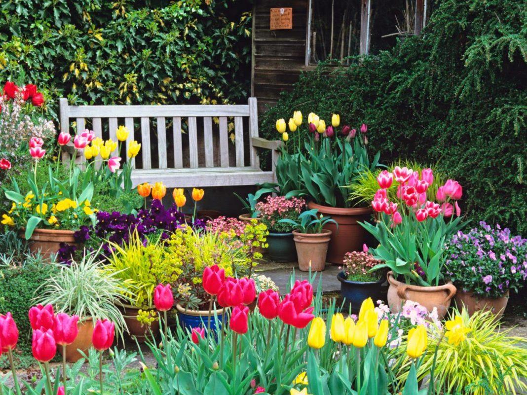 5 садовых цветов, за которыми почти не нужно ухаживать