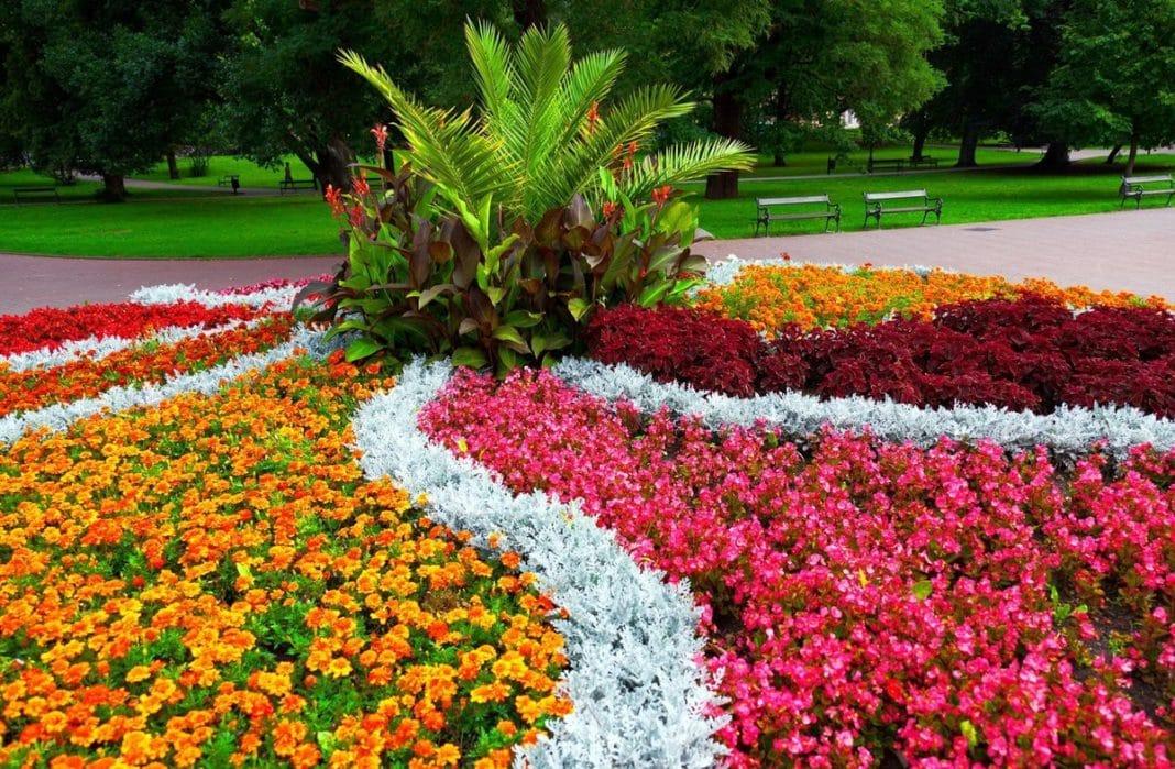 9 многолетних цветковых растений, которые цветут все лето