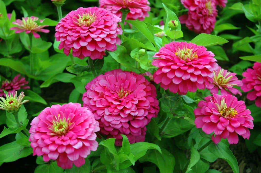 Цветы на рассаду в апреле