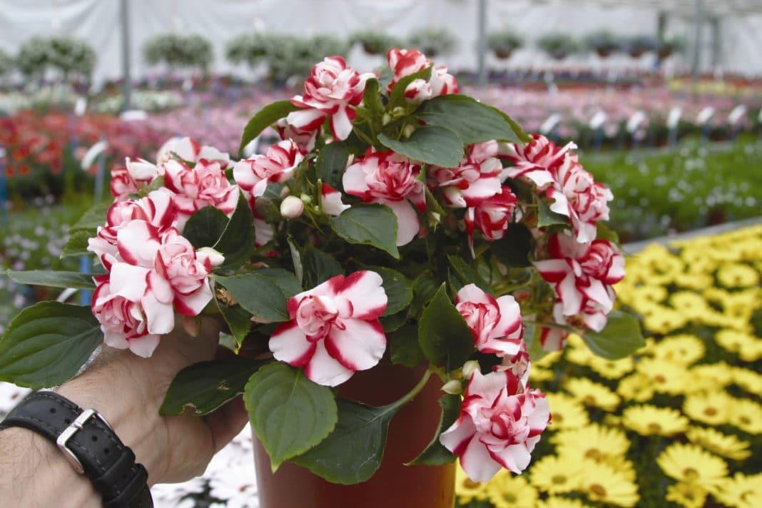 Цветы на рассаду в марте
