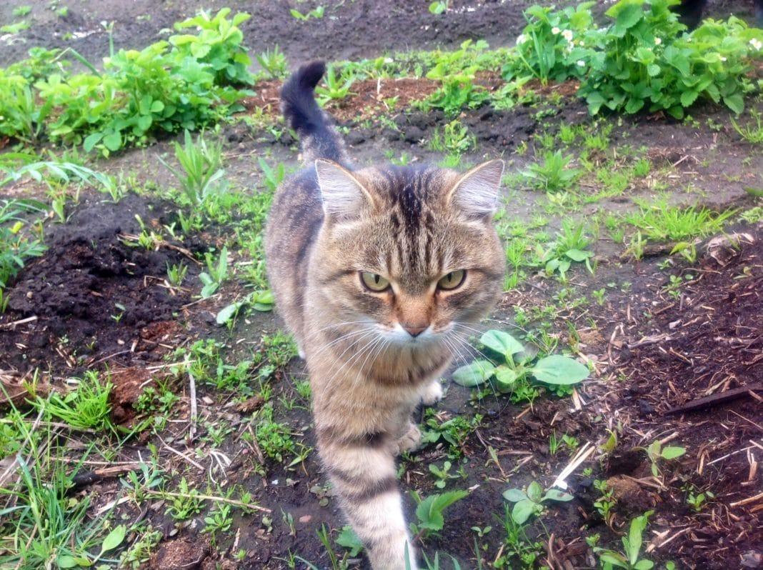 Как отпугивать кошек с участка