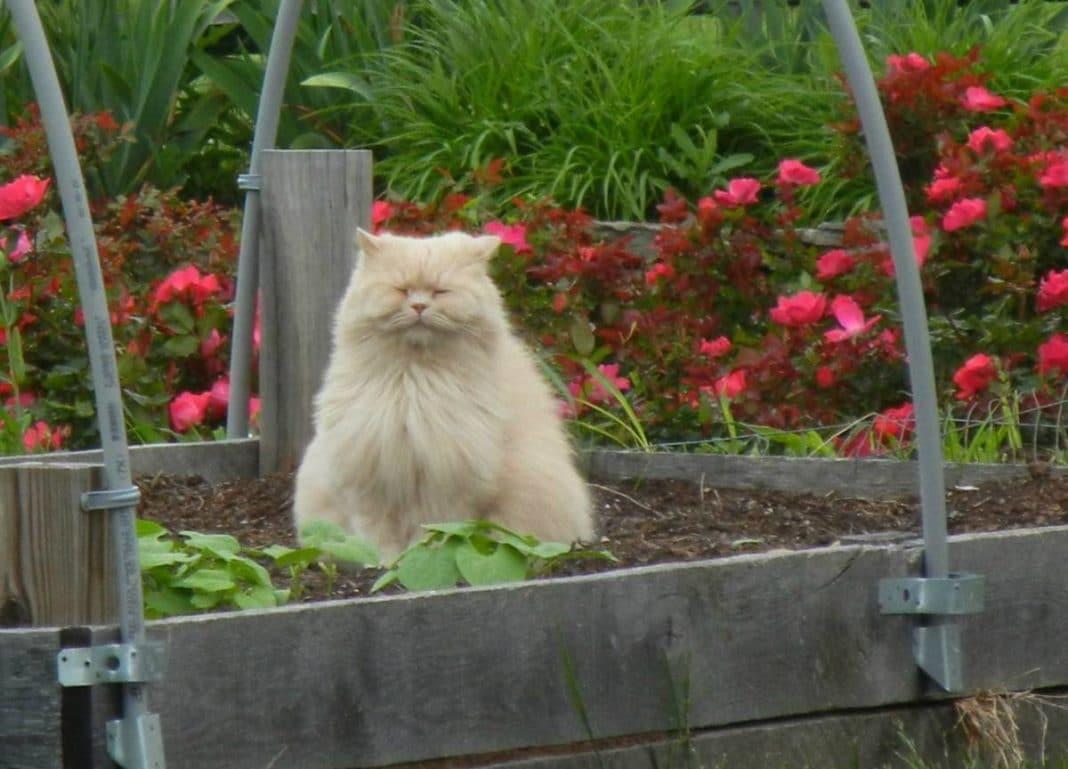 Как защитить грядки от кошек