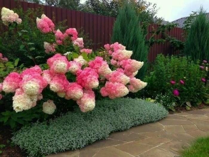 Что посадить вдоль забора: советы опытных садоводов