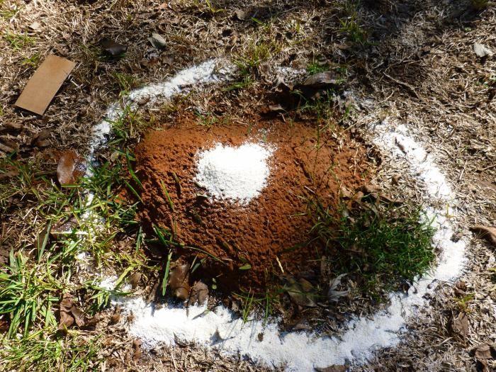 манка для борьбы с муравьями