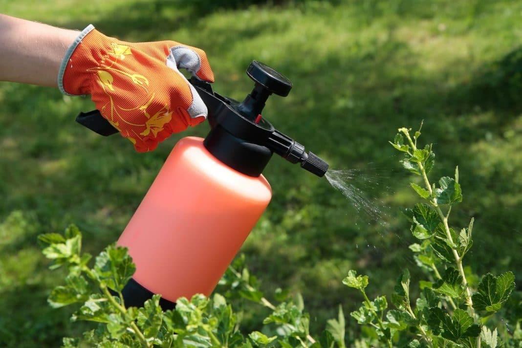 Система удобрения крыжовника необходимые препараты и оптимальные сроки