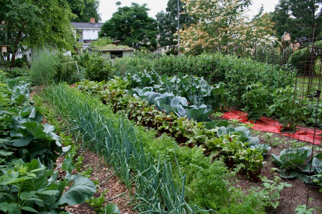 Полезная табличка: сколько и чего сажать на огороде для семьи