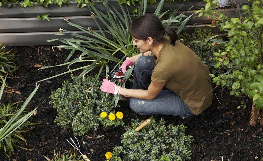 9 растений, которые не стоит сажать на даче