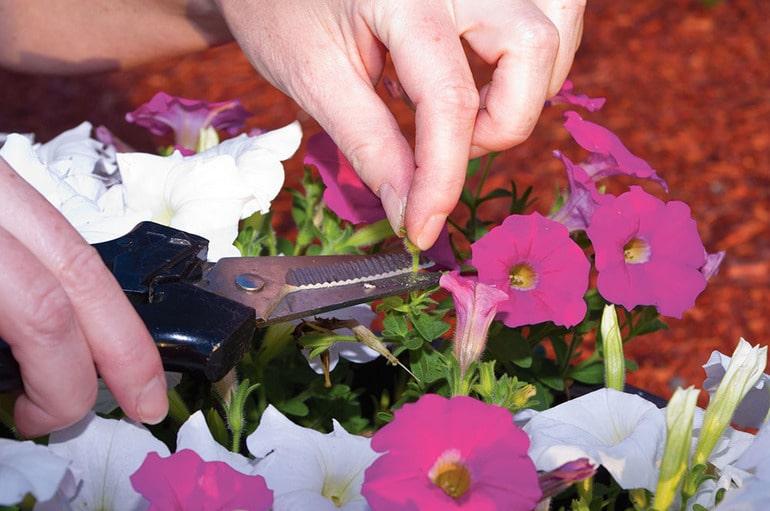 удаление отцветших цветов