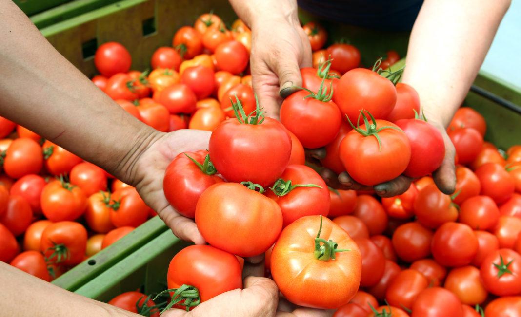 Простой способ, как получить в 3 раза больше томатов