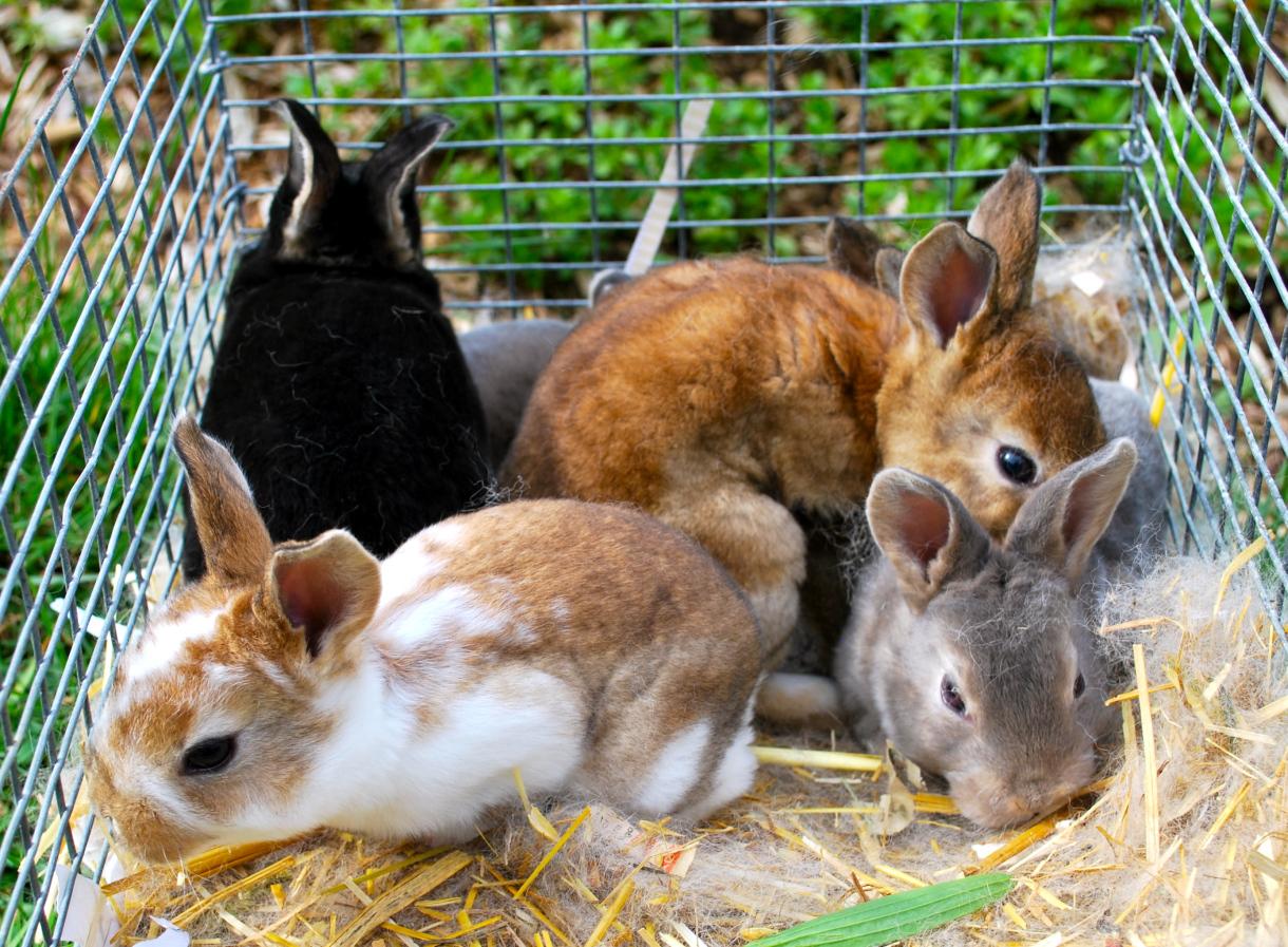 Кроличий навоз на участке: польза или вред