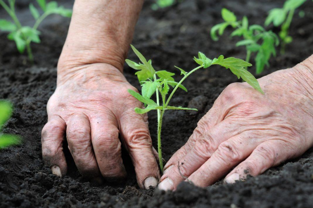 Как отмыть руки после огорода