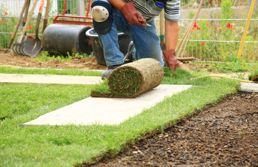 Что лучше посеять газон или купить готовый рулонный?