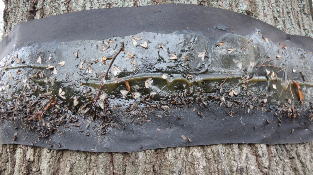 Ловчий пояс для деревьев