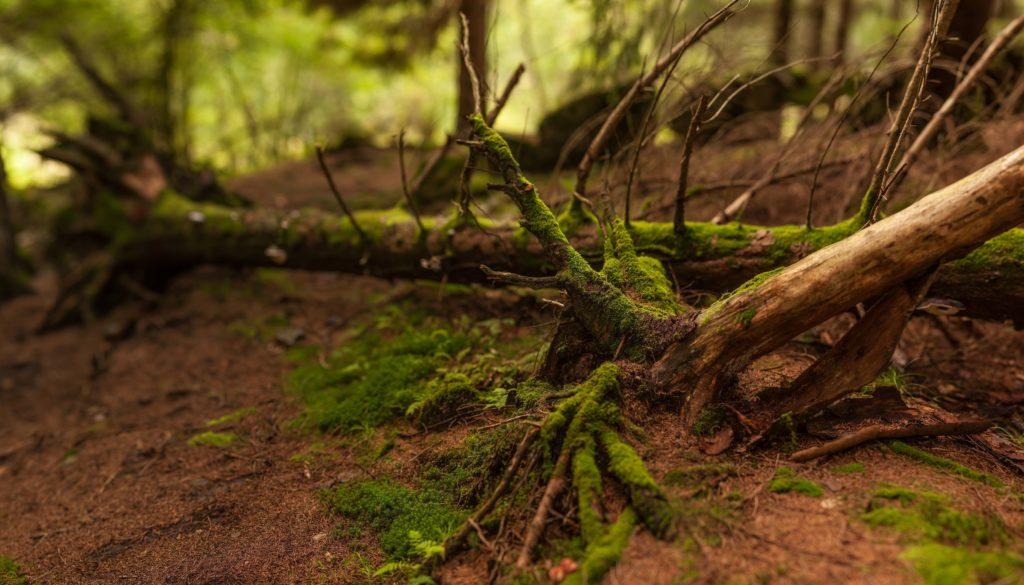 Полезна ли земля из леса на дачном участке?