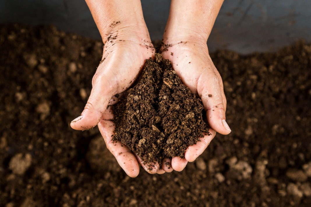 Огород на торфяной почве: плюсы и минусы