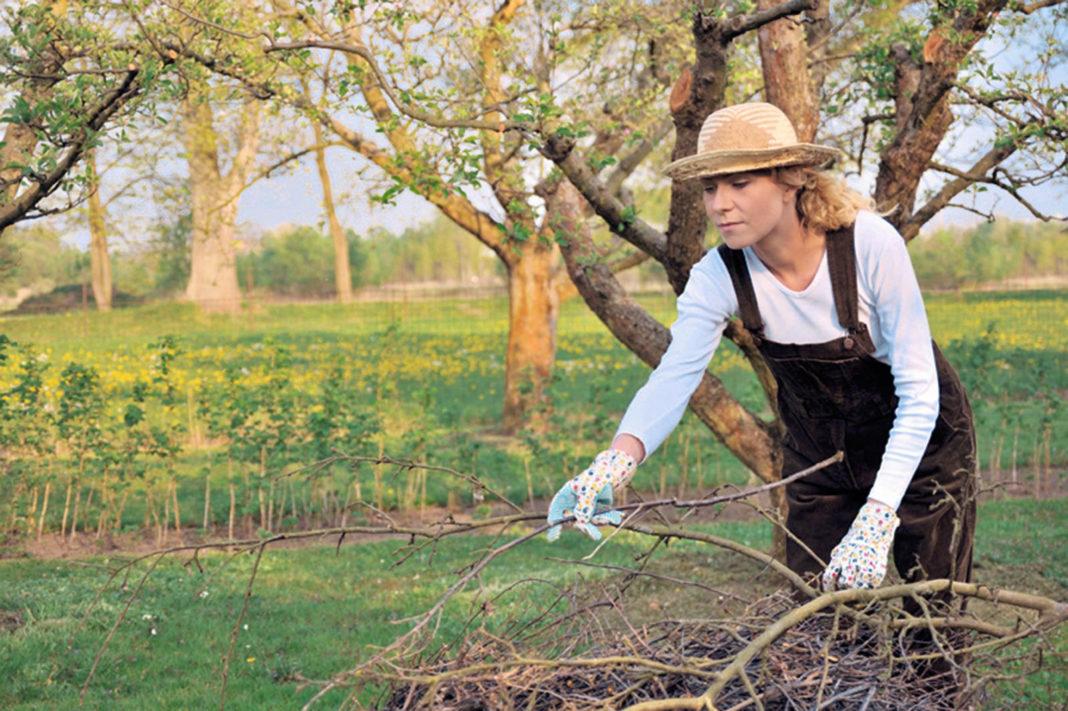 План работы в огороде на октябрь: список главных дел