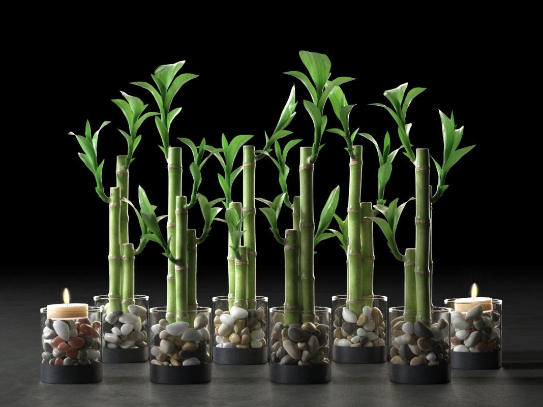 Бамбук как растить в домашних условиях