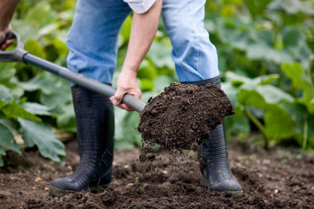 Сбор и хранение урожая, или Лето покажет, кто весной прогулял!