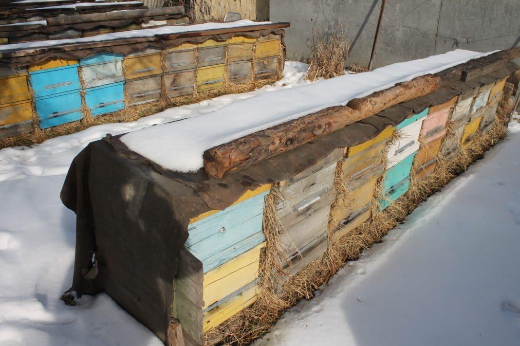 Календарь пчеловода сентябрь, подготовка пчелиных семей к зиме