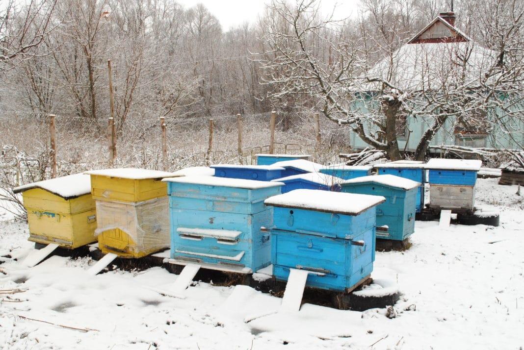 Подготовка к зимовке пчел