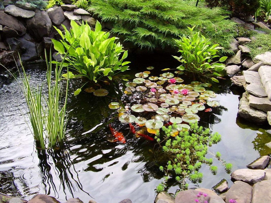 Растения для декоративного водоема исадового пруда на даче