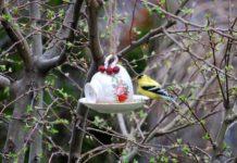 Кормушка из кружки для птиц
