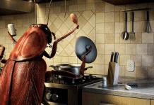 Уничтожение тараканов самостоятельно и с помощью специалистов